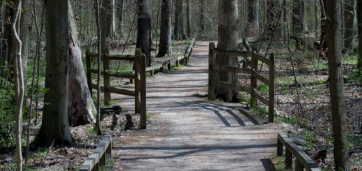 Your Path Driven by You -- Achieving Millennial